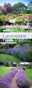 Small Picture Landscaping with Lavender 7 Garden Design Ideas