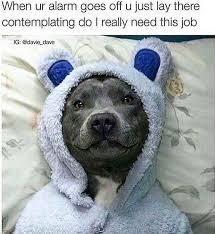 monday-december-2015-memes-04-640x697.jpg via Relatably.com
