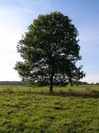 <b>Tree</b> - Wikipedia
