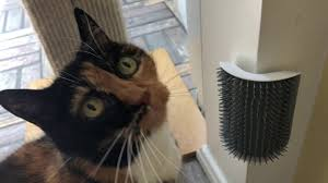 My cat went nuts for this <b>wall</b>-<b>mounted brush</b> - YouTube