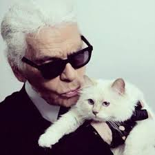 Image result for colour coordinated cat choupette