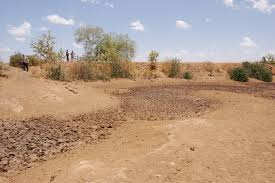 desertification essay deforestation and desertification critical development issues