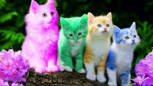 <b>Cute Kitten</b> Cat Colorful Learning Color Video For <b>Kids</b> - <b>Funny</b> ...