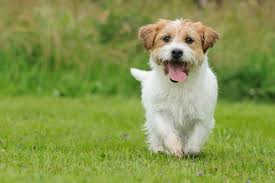 Image result for pictures of dogs'