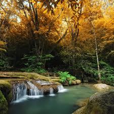 Forest Cascade - www.ilikewallpaper.net