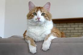 Resultado de imagem para gatos no sofá
