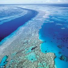 Image result for coral reef barrier