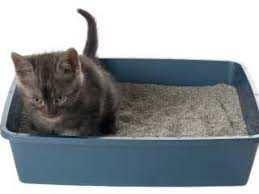 natural ways to eliminate litter box odor wcaxcom local vermont news weather and sports cat litter box