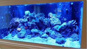 saltwater aquarium service massachusetts aquarium office