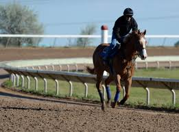 colorado horse track and nine off track betting parlors offer colorado horse track and nine off track betting parlors offer fantasy sports pari mutuel wagering
