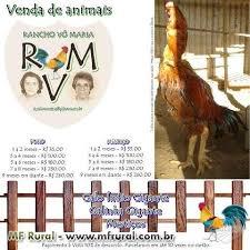 Resultado de imagem para RECEITAS DE GALO, GALINHA, FRANGO