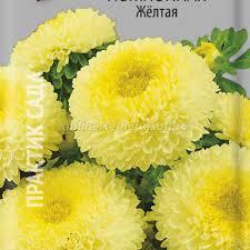<b>Астра помпонная</b> Жёлтая, купить в Москве, астра с доставкой по ...