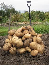 Image result for Autumn uk allotment crops