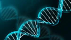 Résultats de recherche d'images pour «génétique»