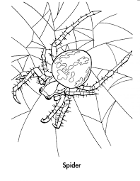 Small Picture Coloring Pages Sydney Brown Trapdoor Spider Coloring Page Free