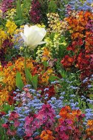 Пин от пользователя Olga на доске цветники.   Цветы ...