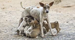 The Global Stray Dog Population Crisis | National Animal Interest …