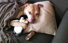 Image result for cuddling a penguin