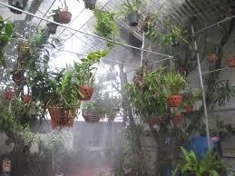 Kết quả hình ảnh cho hệ thống phun sương