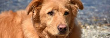 Dog Snow <b>Nose</b>: Why Dogs' <b>Noses</b> Turn Pink | Hill's Pet