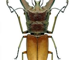 Home Décor Supplies for taxidermy artworks <b>dried</b> folded insects ...