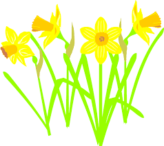 Image result for spring daffodil cartoon