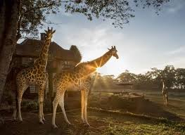 The Safari Collection – A unique collection of luxury lodges in Kenya