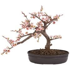 1000 images about bonsai on pinterest cherry blossoms bonsai trees and pistachio tree bought bonsai tree