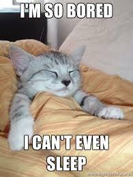 I'm so bored I can't even sleep - sleeping cats | Meme Generator via Relatably.com