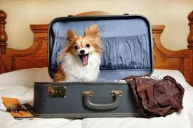 Image result for traveling with pets