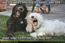 Funny poodles | Meme | Pinterest | Poodles, Funny and Lol via Relatably.com