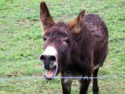 Image result for free images donkey braying