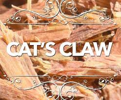 <b>Cat's Claw</b> for <b>Dogs</b> | Safety and Side Effects