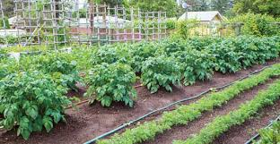 Small Picture Choose the Best Garden Watering Systems Organic Gardening
