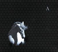 <b>Аквариум</b>. <b>Лошадь белая</b> — купить в интернет-магазине OZON с ...