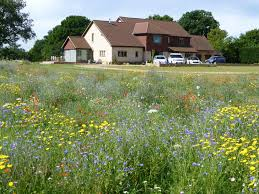 Small Picture Using wild flowers in gardens Wild Flower Lawns Meadows Buy