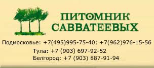 <b>Березовый гриб чага</b> - Познавательно - В мире растений