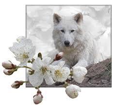 """Résultat de recherche d'images pour """"GIF de chiens et loups"""""""
