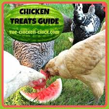 Chicken Treats Guide. Don'<b>t Love</b> Your Pets to Death. | <b>The</b> Chicken ...