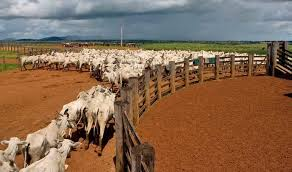 Companies sourcing beef, <b>leather</b> from <b>China</b> exposed to Brazil ...