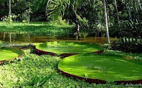 البوم من الطبيعة images?q=tbn:ANd9GcQ
