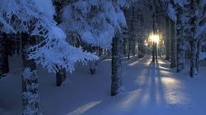 """Képtalálat a következőre: """"winter forest"""""""