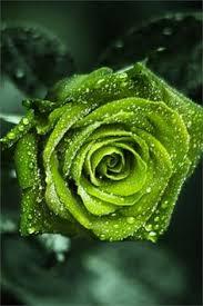 Green: лучшие изображения (514) | Зеленый, Природа и Оттенки ...