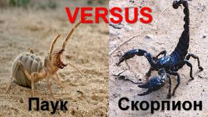 Версус. Паук против <b>Скорпиона</b>, кто сильнее? - YouTube
