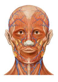 「Willis動脈輪閉塞症ともやもや病」の画像検索結果
