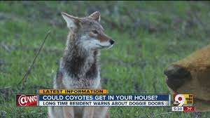 Image result for photo coyotes subdivision