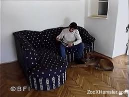 animals-porno-video Videos / Page 6 / ZooXhamster.com
