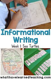 set the routine informational writing week sea turtles help students construction well written informational and expository writing by showing them how to gather