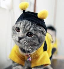 Image result for halloween cat