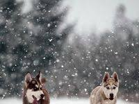 70+ <b>Dogs</b> in <b>Winter</b> ideas | <b>dogs</b>, cute <b>animals</b>, <b>pets</b>